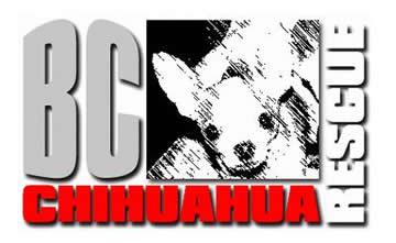 BC Chihuahua Rescue